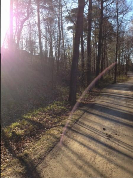 Metsäpolku työmatkan varrella.